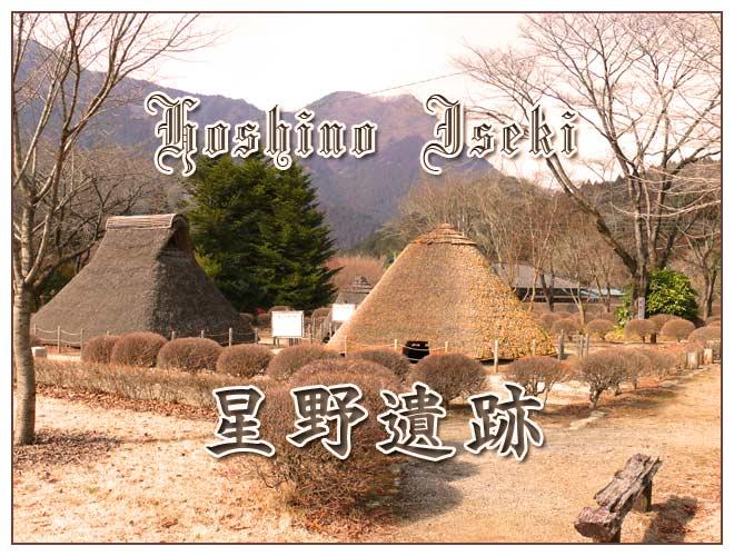 栃木県星野遺跡の花紹介