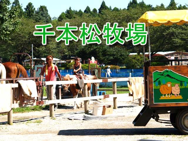 千本松牧場 千本松牧場 千本松牧場 乗馬 千本松牧場は、塩原温泉に行くときには、よく立ち寄る場所