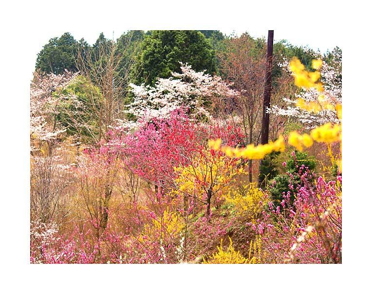 色々な花の色が楽しめる花の山