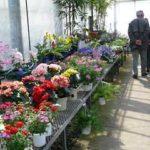 うつのみや緑花木セ ンターで安売りとバラ教室開催無料